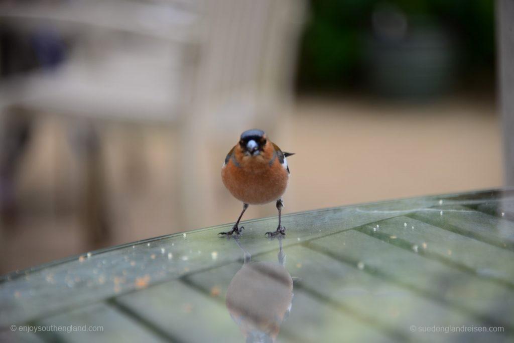 DIe einheimische Vogelwelt begrüßt die Besucher