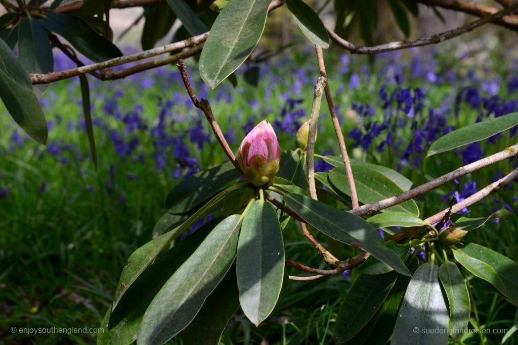 Im Borde Hill Garten