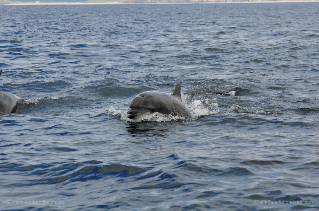 Delfine auf der Rückfahrt