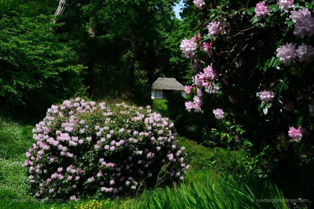 aber volle Blüte ist natürlich viel schöner