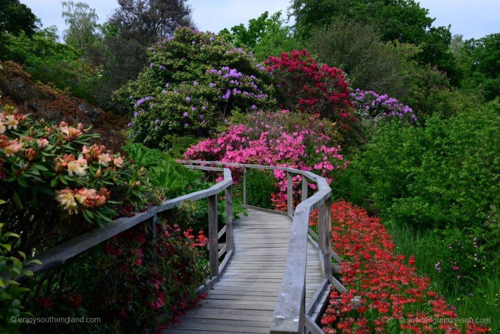 Blütenpracht in Furzy Garden