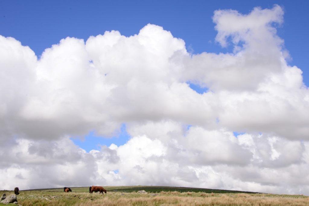 Stimmung im Dartmoor
