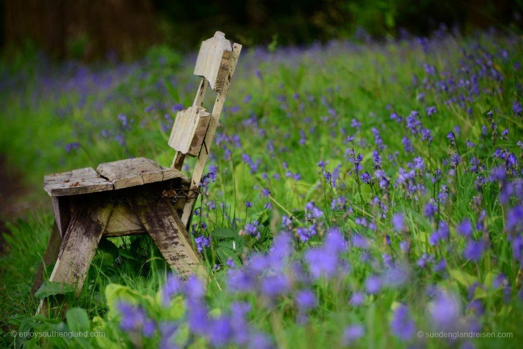 Einfach mal in den Bluebells sitzen und entspannen