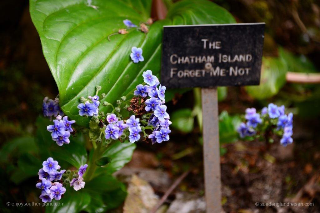 """The """"Forget me not"""" - Enys Gardens in Cornwall ist wirklich unvergesslich!"""
