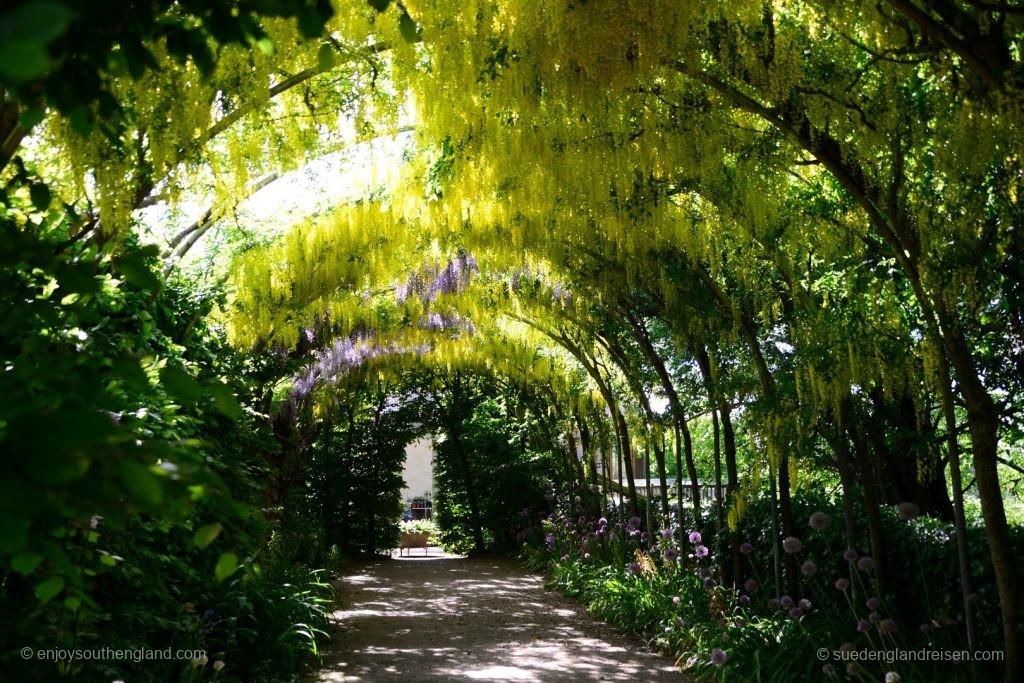 Abbey House Gardens - unter dem Gyziniendach im formalen Garten