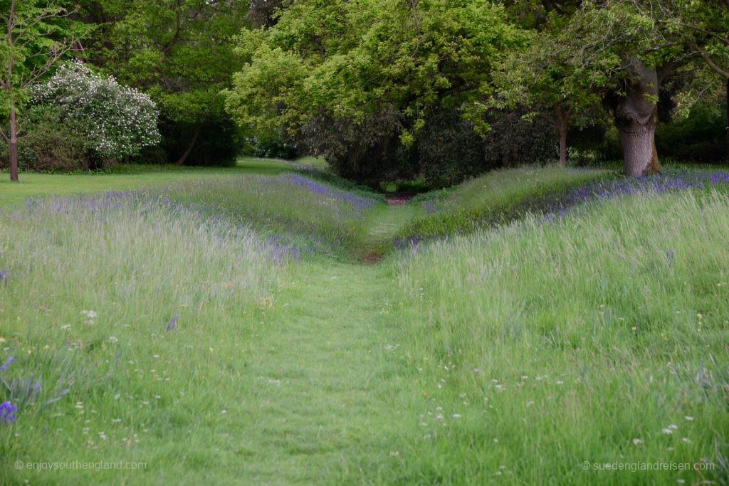 Von Bluebells gesäumter Weg im Park von Blenheim Palace