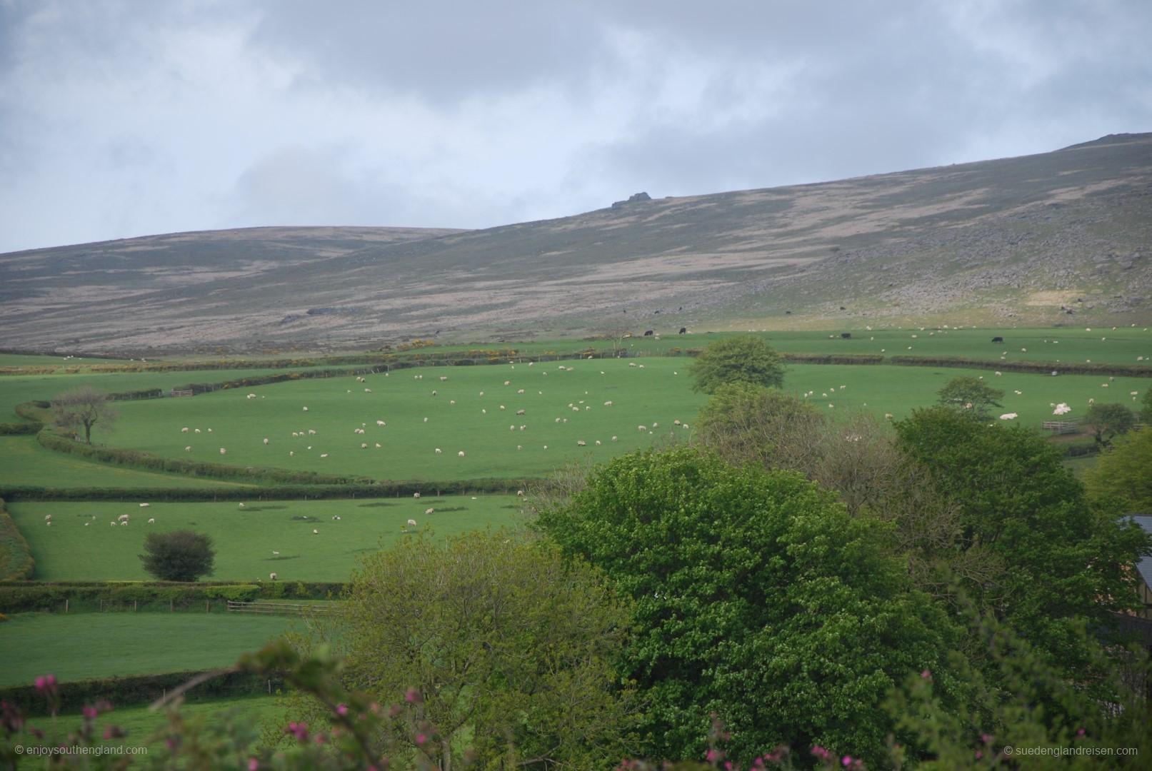 Das Dartmoor - eine Mischung aus Kulturlandschaft und Moorgebiet.