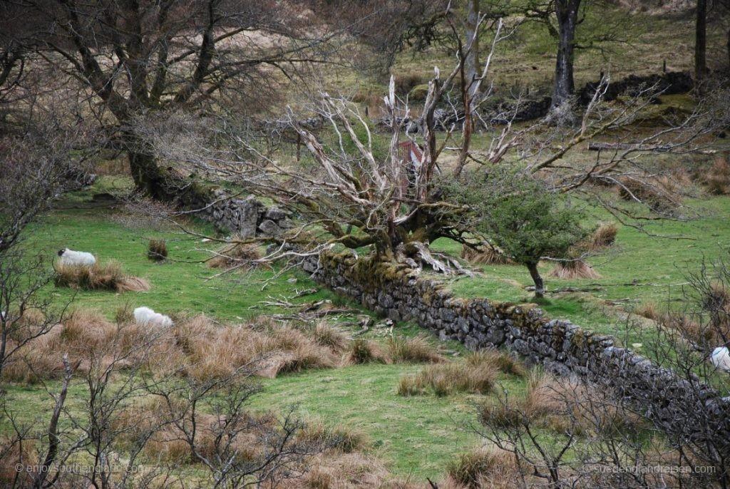 abseits der Straßen im Dartmoor