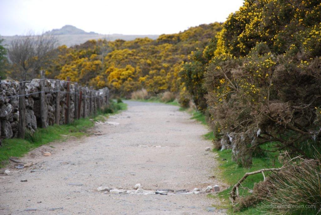 Lohnenswert sind natürlich die kleinen Wege im Dartmoor