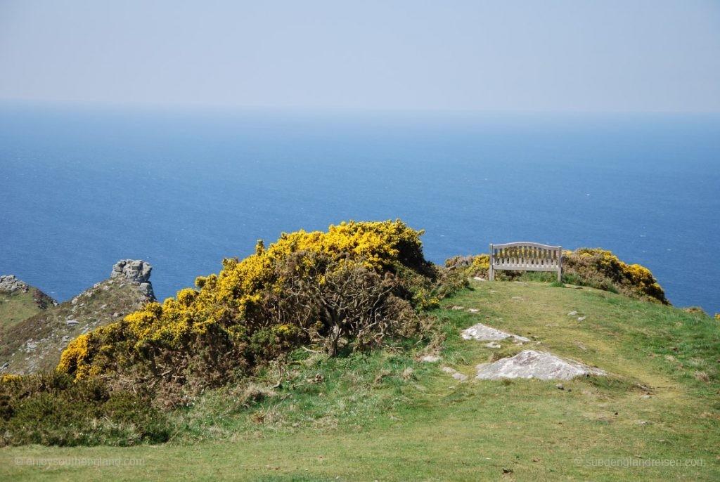 Strahlender Ginster mit Blick auf den Bristol Channel und ganz im Hintergrund Wales