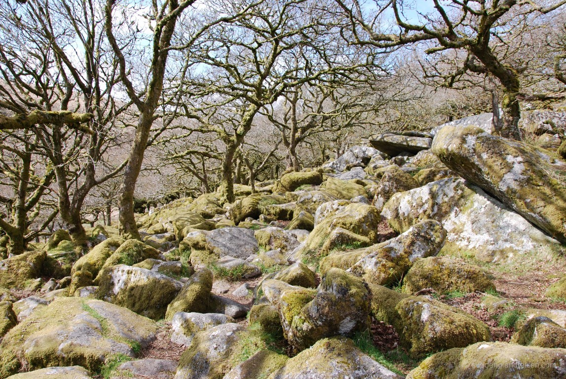 Der Whistman's Wood im Dartmoor