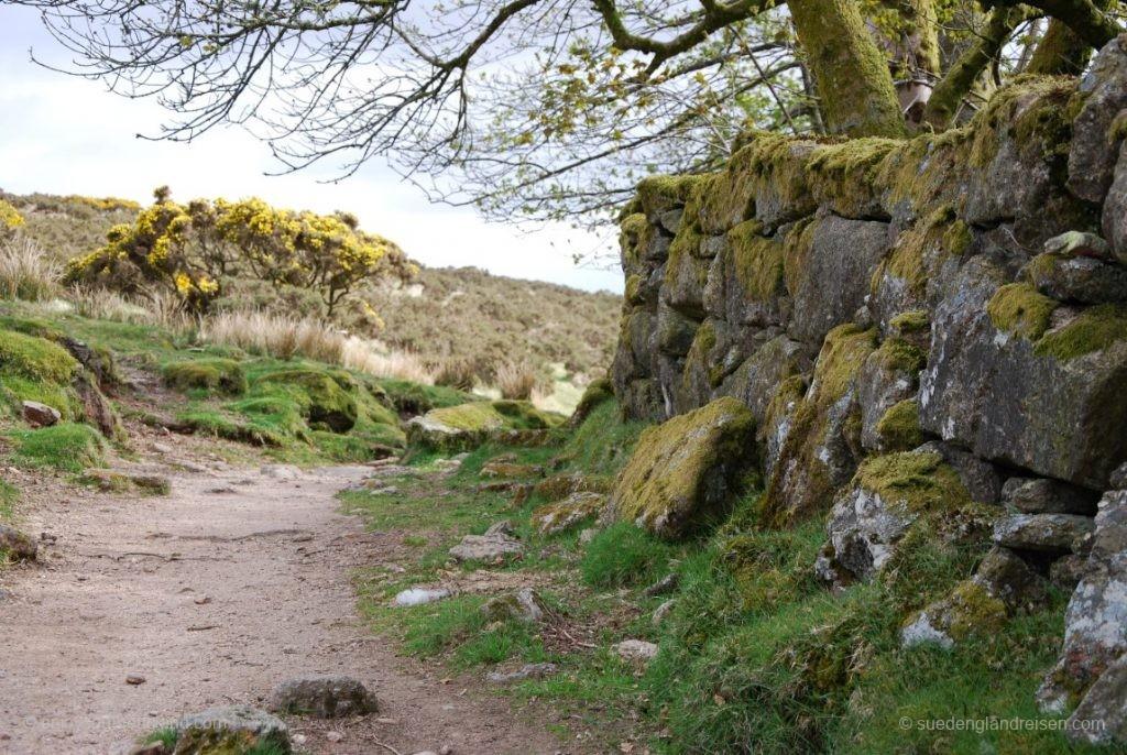 erst ein unspektakulärer Weg zum Whistman's Wood im Dartmoor