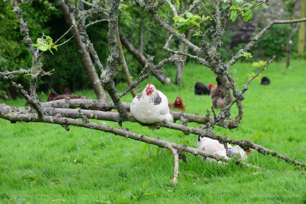Auch das findet man in den Lost Gardens of Heligan (Cornwall): Eine komplette Landwirtschaft
