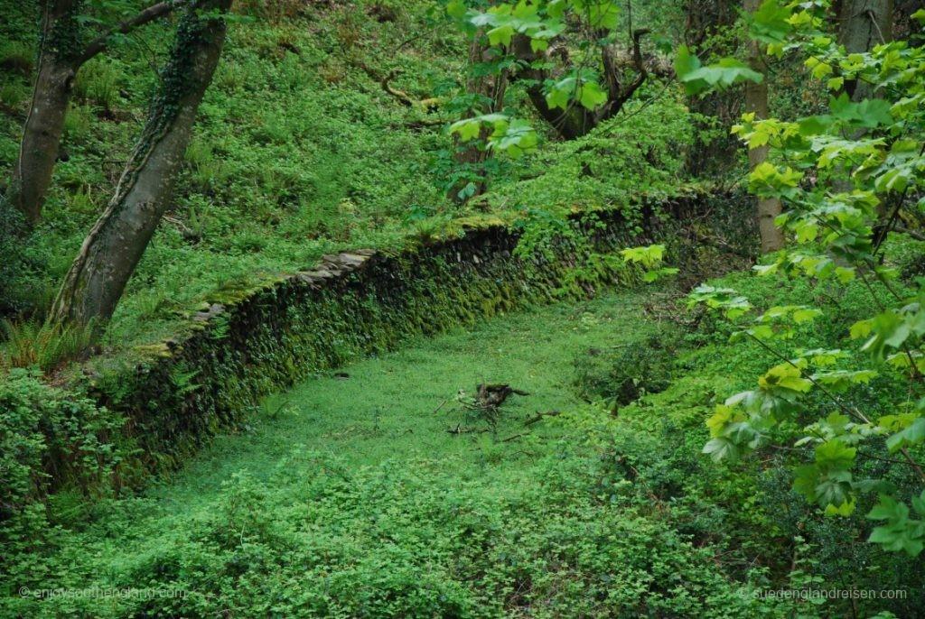 Dichtes Grün im Wald hinter Selworthy