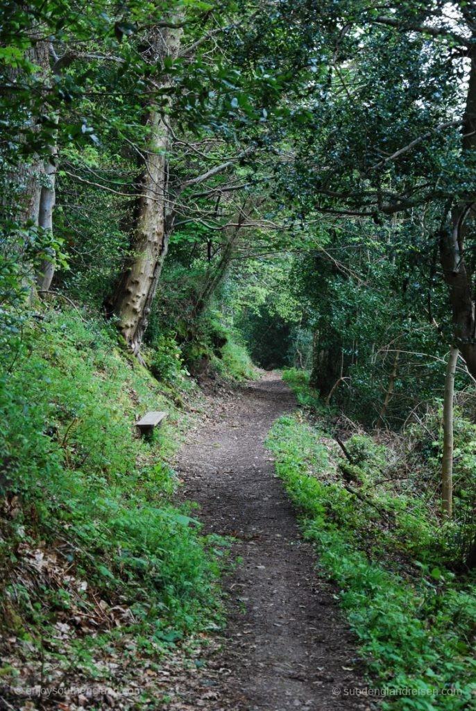 Waldweg zurück vom Selworthy Beacon nach Selworthy