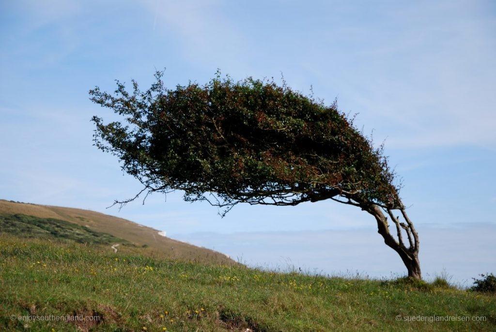Hier bei den Seven Sisters herrscht doch ein recht starker und einseitiger Wind.