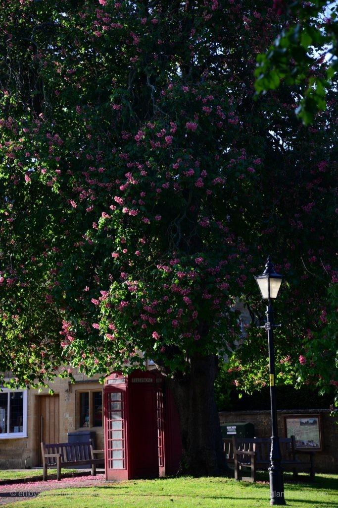 Der Frühling läßt die Kastanien in Broadway blühen - und untendrunter sonnt sich eine Telefonzelle