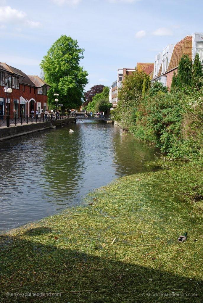 Natur in der Stadt Salisbury - links ist eine Promenade mit Geschäften