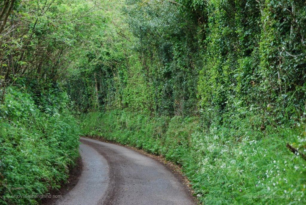 Eine ganz normale Landstraße - mit nur leicht eingeschränkter Sicht.