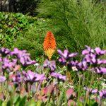 Im Inverewe Garden