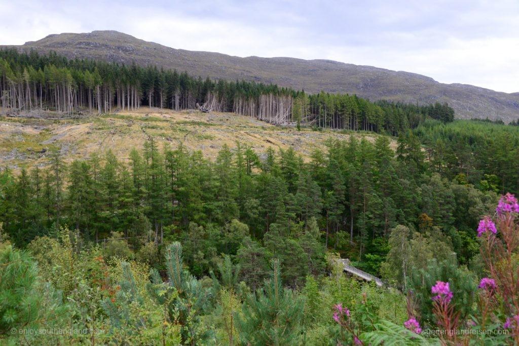 Leider auch hier wie fast überall großflächge Abholzungen, dass einem das Herz blutet.