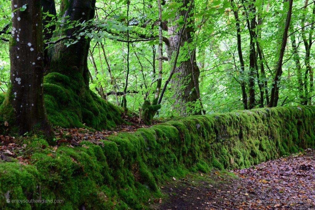 Am Linn of Tummel Trail - tiefgrüne Wälder und viel Moos