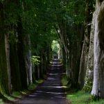 Die lange Allee zu Drummond Castle Gardens