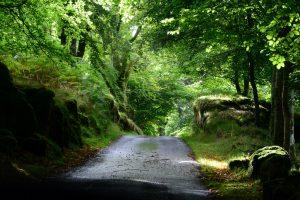 Allein diese Zufahrt zu Dummond Castle Gardens lohnt die Anfahrt