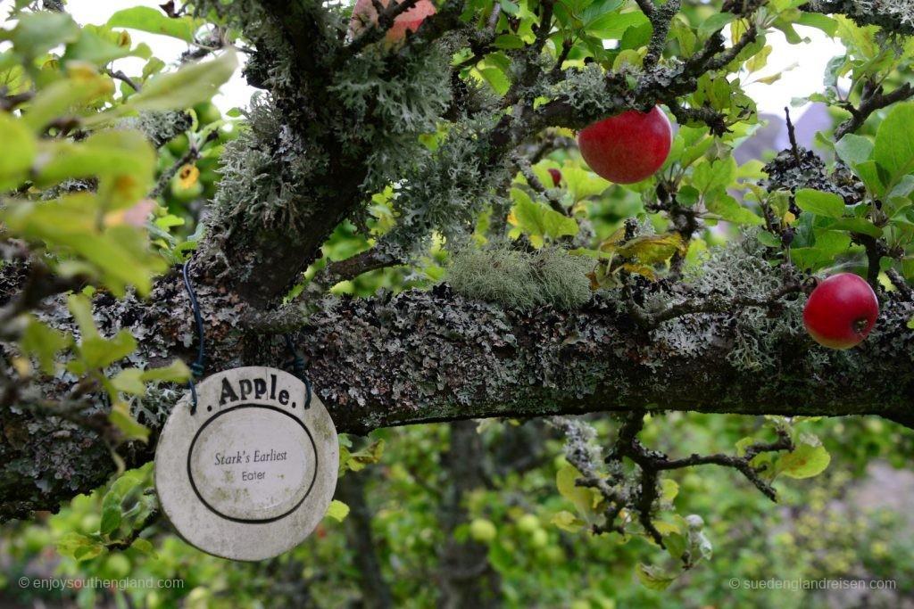 Priorwood Garden in Melrose - uralte Apfelbäume