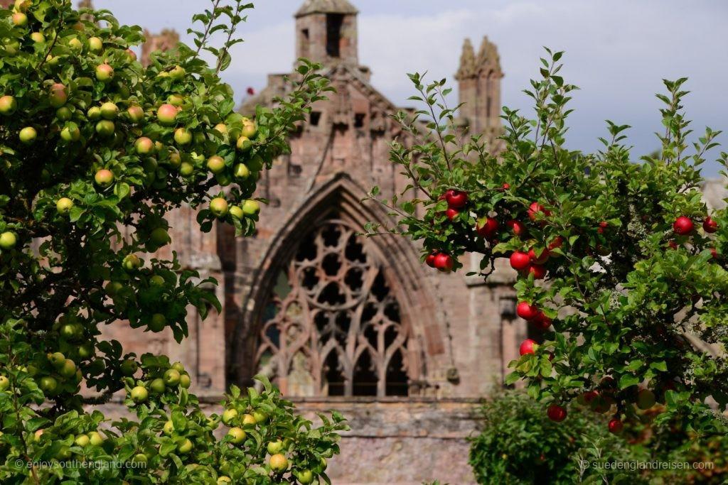Melrose Abbey vom Priorwood Garden aus gesehen