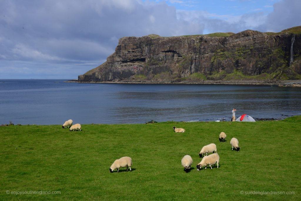 Idylle pur an der Talisker Bay: Tiefgrüne Wiese mit Schafen, dahinter tiefblaues Meer und rechts an den Felsen rauscht ein Wasserfall... Gibt es einen schöneren Platz, um die Nacht zu verbringen?