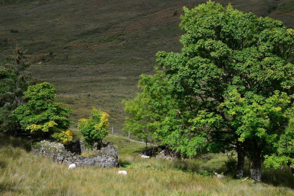 Das Haus muß schon lange Geschichte sein, so groß wie die Bäume sind...