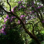 im Trebah Garden (Cornwall)