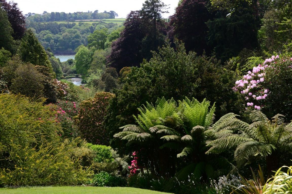 Trebah Garden ist einer dieser für Cornwall typischen Gärten, die in einem kleinen Tal zum Wasser hin mit besonderem Mikroklima liegen.