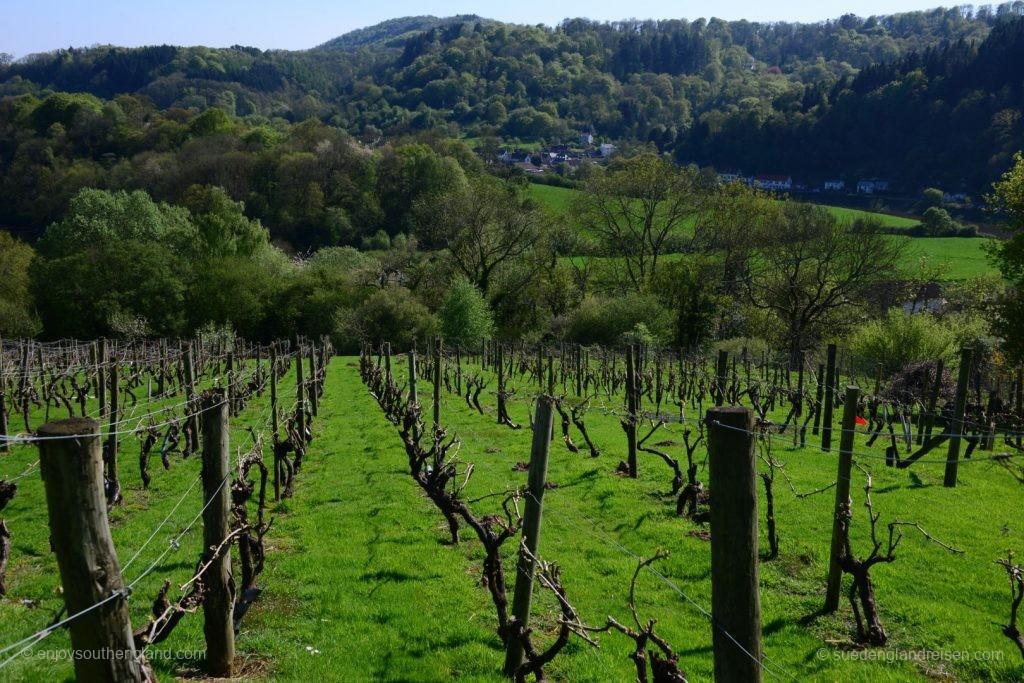 Blick aus den Weingärten der Pava Farm mit Tintern im Hintergrund