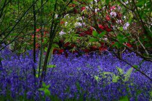 Hidden Gardens