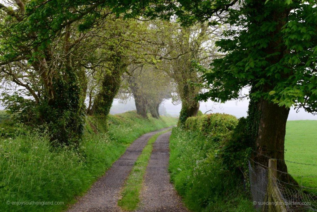 Ein Nebeltag auf Anglesey