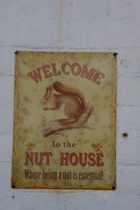 """Dämlich (""""nuts"""") sein ist essentiell!"""