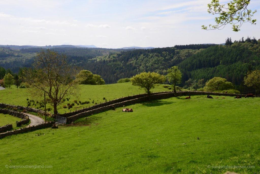 im Gwydir Forest