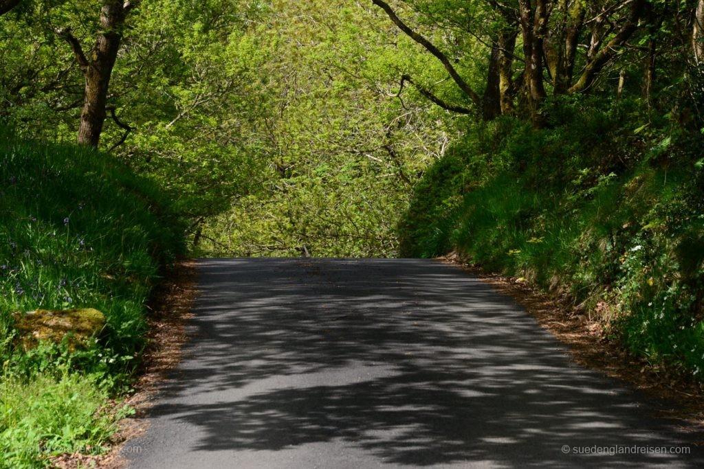 schmale Straßen im Gwydir Forest