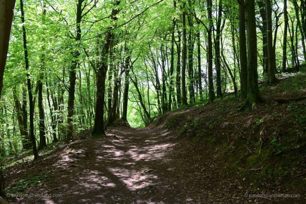 In den Wäldern um Castle Coch