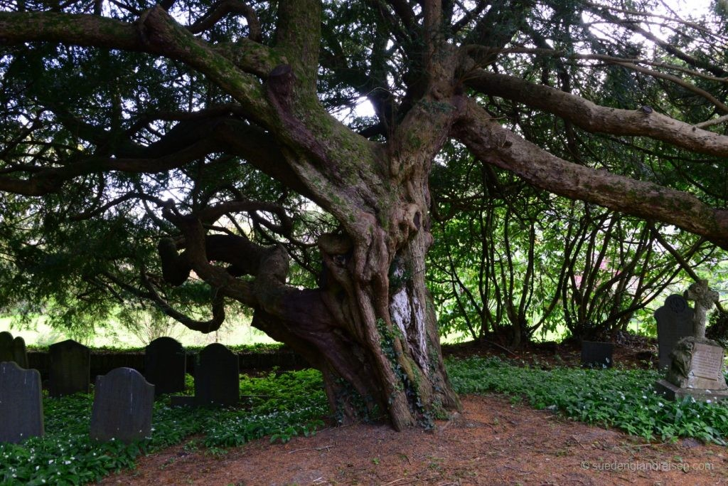 The Bleeding Yew Tree von Nevern