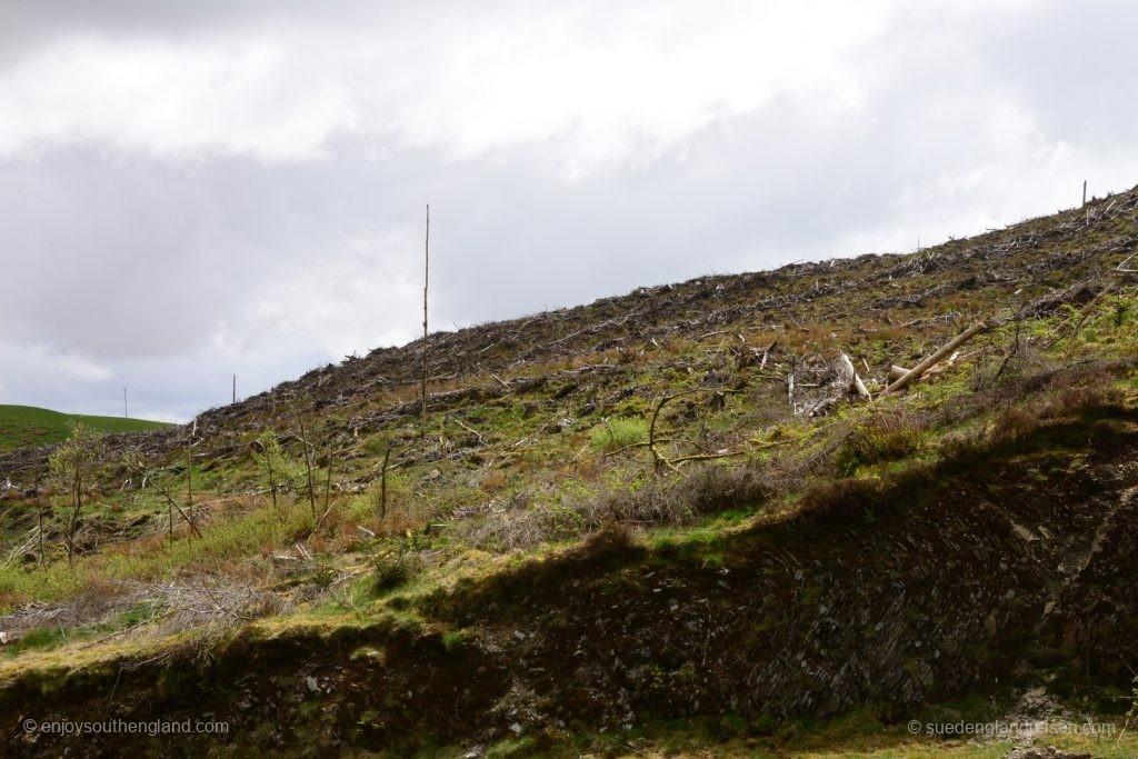 auch das ist Wales: Grossfläche Rodungen zur Nutzholzgewinnung