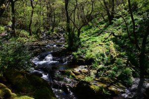 Wanderung bei den Dolgoch Falls