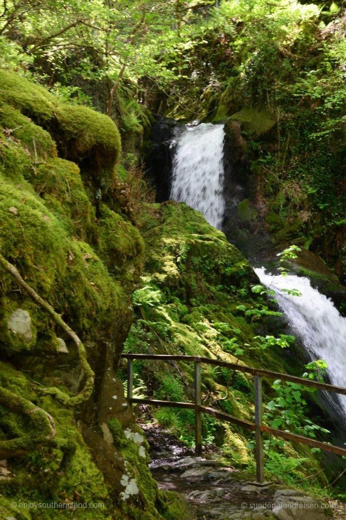 Dolgoch Falls - grün in grün
