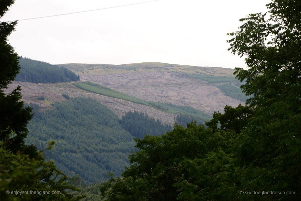 Gar nicht schön: Die großflächigen Abholzungen zur Nutzholzgewinnung. Und wieso so etwas im Nationalpark?