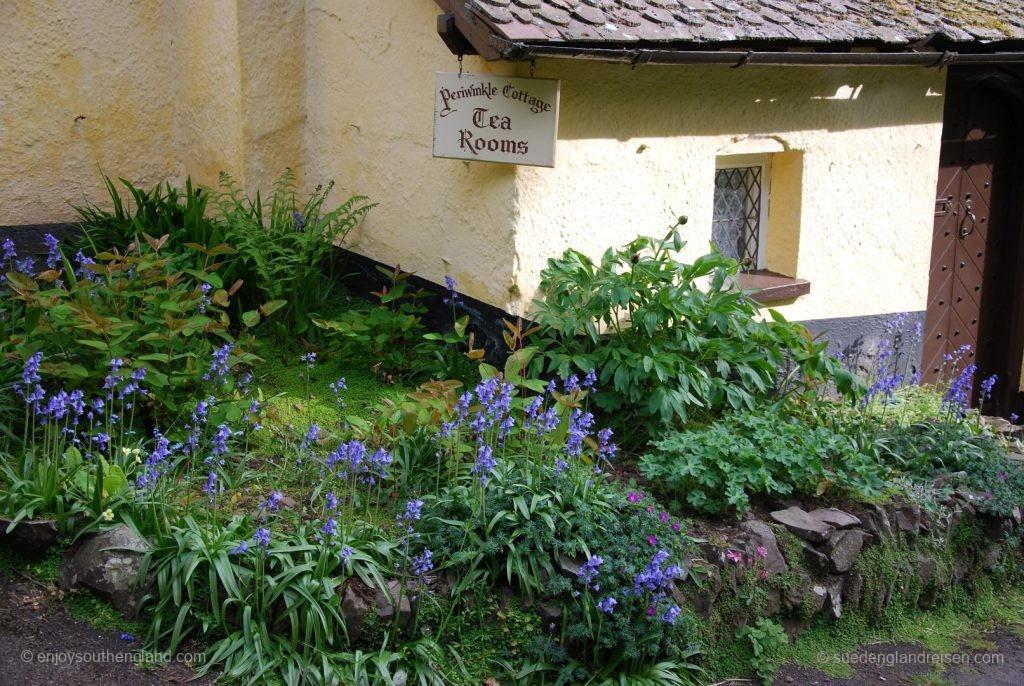 Ziel der Sehnsucht nach Cream Tea: Tea-Room in Selworthy (Somerset)