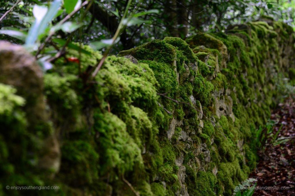 Typische Begrenzung einer südenglischen Straße: Bemooste Steinmauer